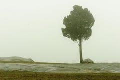 Arbre en brouillard Photographie stock libre de droits