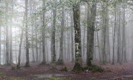 Arbre en brouillard Photos stock