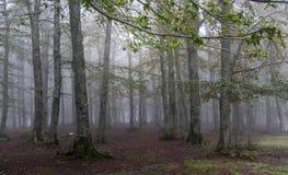 Arbre en brouillard Photographie stock