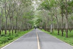 arbre en caoutchouc de plantation photos stock