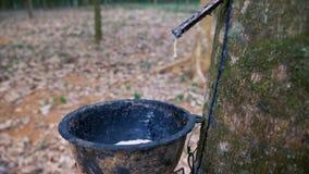 arbre en caoutchouc de plantation clips vidéos