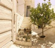 Arbre en dehors de l'île à la maison de Cyclades, Grèce Photographie stock libre de droits
