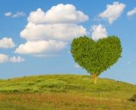 Arbre en forme de coeur vert sur un pré-symbole de ressort de jour d'amour et de ` s de Valentine Photographie stock libre de droits