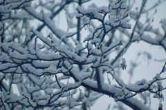 Arbre en hiver Image stock