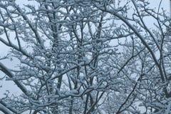 Arbre en hiver Image libre de droits