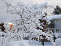 Arbre en hiver photographie stock