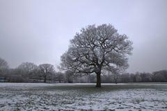 Arbre en hiver images stock