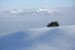 arbre en horizontal de l'hiver Photographie stock