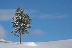 Arbre en horizontal de l'hiver Photographie stock libre de droits