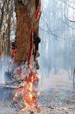 Arbre en incendie Photo libre de droits