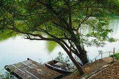 Arbre en la rivière et le bateau Images libres de droits