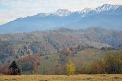 Arbre en montagne d'automne photo stock