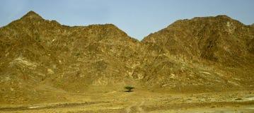 Arbre en montagnes désolées Photo stock