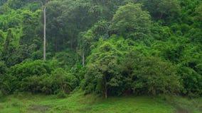 Arbre en nature de forêt tropicale banque de vidéos