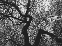 Arbre en noir et blanc Photo stock