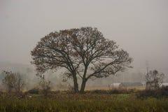 arbre en retard de pays de matin d'automne photographie stock