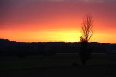 Arbre en silhouette au coucher du soleil Image libre de droits