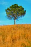 Arbre en Toscane no.1 Image libre de droits