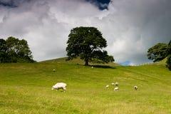 Arbre en vallées de Yorkshire Image stock
