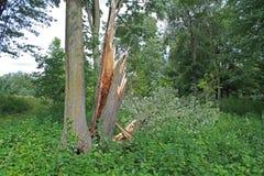 Arbre endommagé par tempête Photos stock