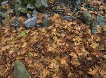 Arbre envahi avec de la mousse dans la forêt dans les montagnes Dirfis sur l'île de photo libre de droits