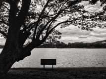 Arbre et banc Photo stock