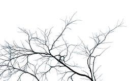 Arbre et branche morts sur le fond blanc Branches noires de contexte d'arbre Fond de texture de nature Branche d'arbre photographie stock libre de droits