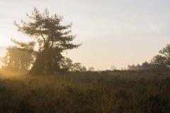 Arbre et bruyère pendant le lever de soleil Photographie stock libre de droits
