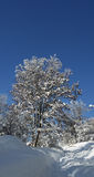 Arbre et chemin neigeux Photographie stock