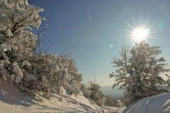 Arbre et chemin neigeux Photo stock