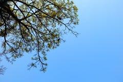 Arbre et ciel Photo libre de droits