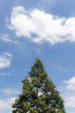 Arbre et ciel avec des nuages images libres de droits
