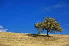 , arbre et ciel bleu Image stock
