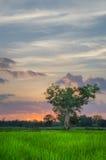 Arbre et ciel géants Images libres de droits