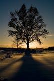 Arbre et coucher du soleil Image stock
