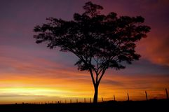 Arbre et coucher du soleil photo stock