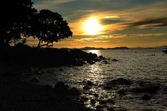 Arbre et coucher du soleil de silhouette Photographie stock libre de droits