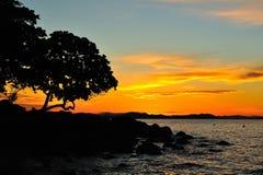 Arbre et coucher du soleil de silhouette Photographie stock