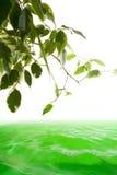 Arbre et eau verts Photographie stock