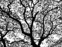 Arbre et feuille noirs et blancs Photo stock