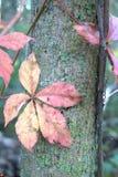 Arbre et feuilles Photographie stock libre de droits