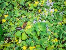 Arbre et feuilles dans l'étang Photo libre de droits