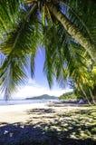 Arbre et feuilles de noix de coco Images libres de droits