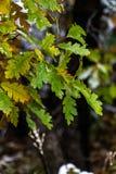 Arbre et feuilles pendant l'automne de chute après pluie image stock