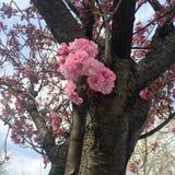 Arbre et fleur photo stock
