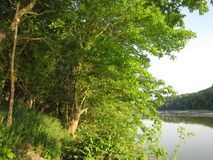 Arbre et fleuve Potomac verts images libres de droits