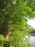 Arbre et fleuve Potomac verts au coucher du soleil images libres de droits