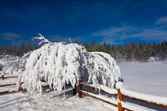 Arbre et frontière de sécurité couverts par neige Image stock