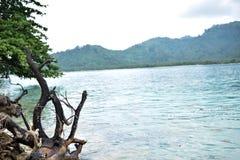 Arbre et grand tronc en bois échoués sur le rivage Photo stock