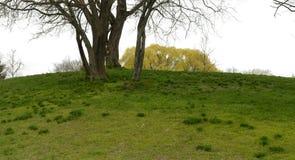 Arbre et herbe Image libre de droits